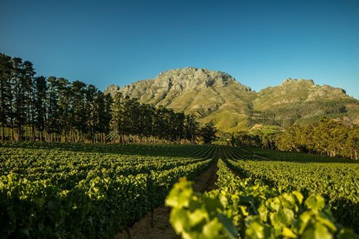Chef & the Vine with Thelema Mountain Vineyards
