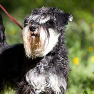 Hondenwandeling in de natuur (Dierendag Kiewit)