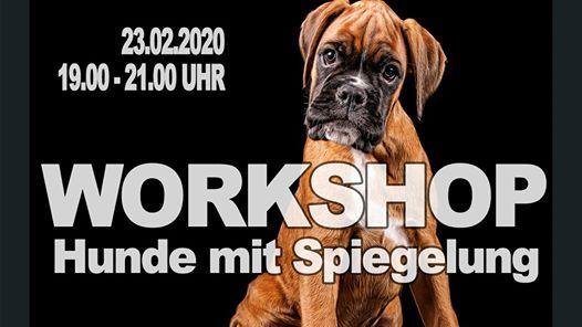 Workshop Hunde mit Spiegelung