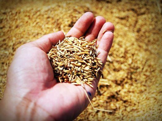 Lezing Duurzame voedselproductie en voedselzekerheid