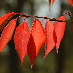 Autumn Tints Photography