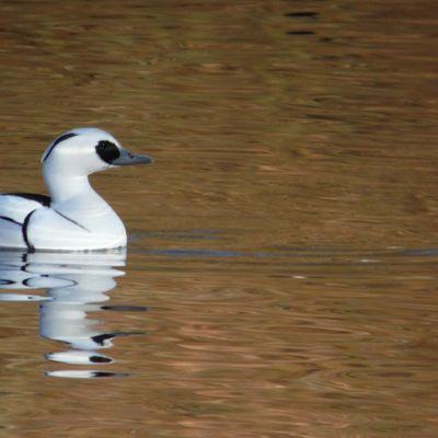 Birdwatching Classes woodland wetland and farmland