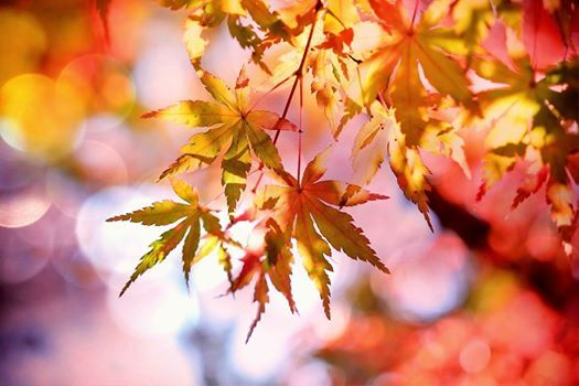 Herfst yin yoga xl en brunch
