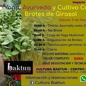 Yoga ayurveda y cultivo casero de brotes de girasol