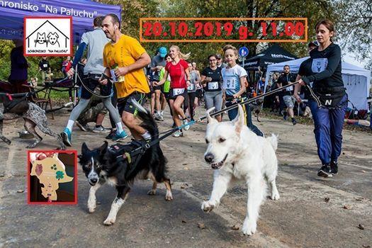 Warszawa Run Hau 2019