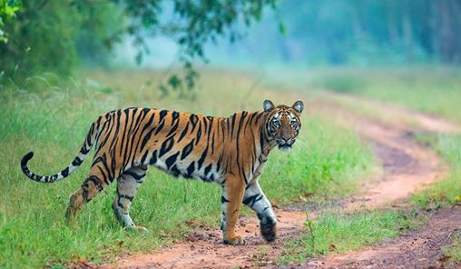 Tiger Tales  Wildlife Photography Tour of Tadoba
