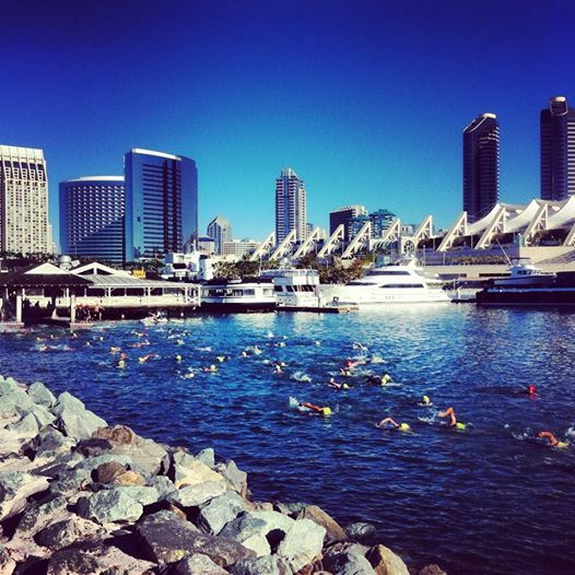 San Diego Sharkfest (Coronado Bridge Swim) - 11th Annual