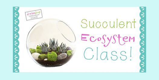Succulent Ecosystem Class