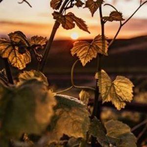 Art of Wine & Food Pilgrims of Spain