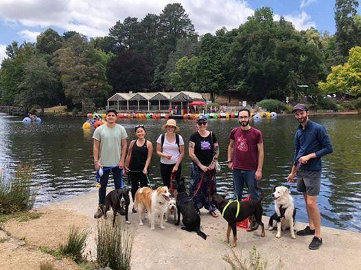 Doggy Picnic Adventure - Dandenongs