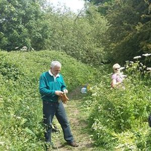 Balsam Bash - Friends of the Don Valley Way - Carlisle Street