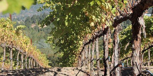 La Paule Wine Dinner Series Barolo and Brunello di Montalcino