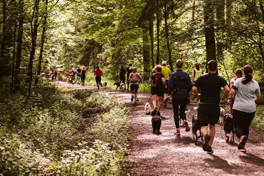 TRAILDOG Cragside & Family Wolfpack Run