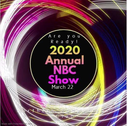 Annual NBC Show - Budgerigar