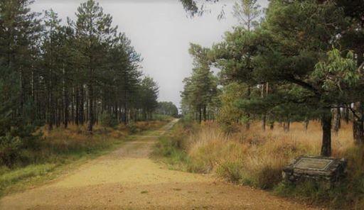 SIKA 10km Run 2020